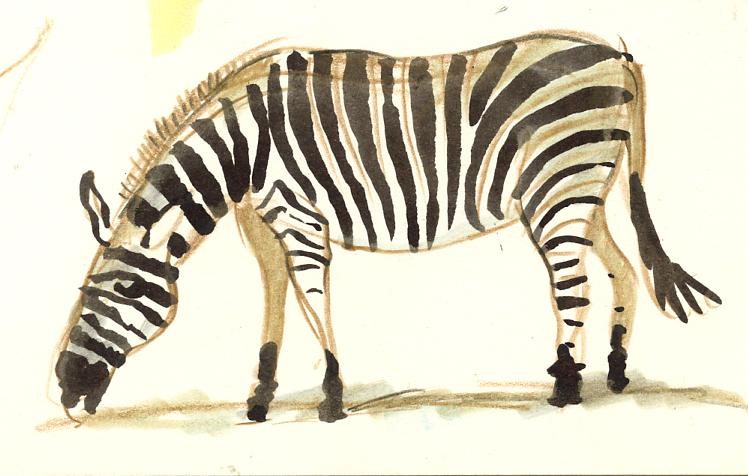 cotswold-zebra