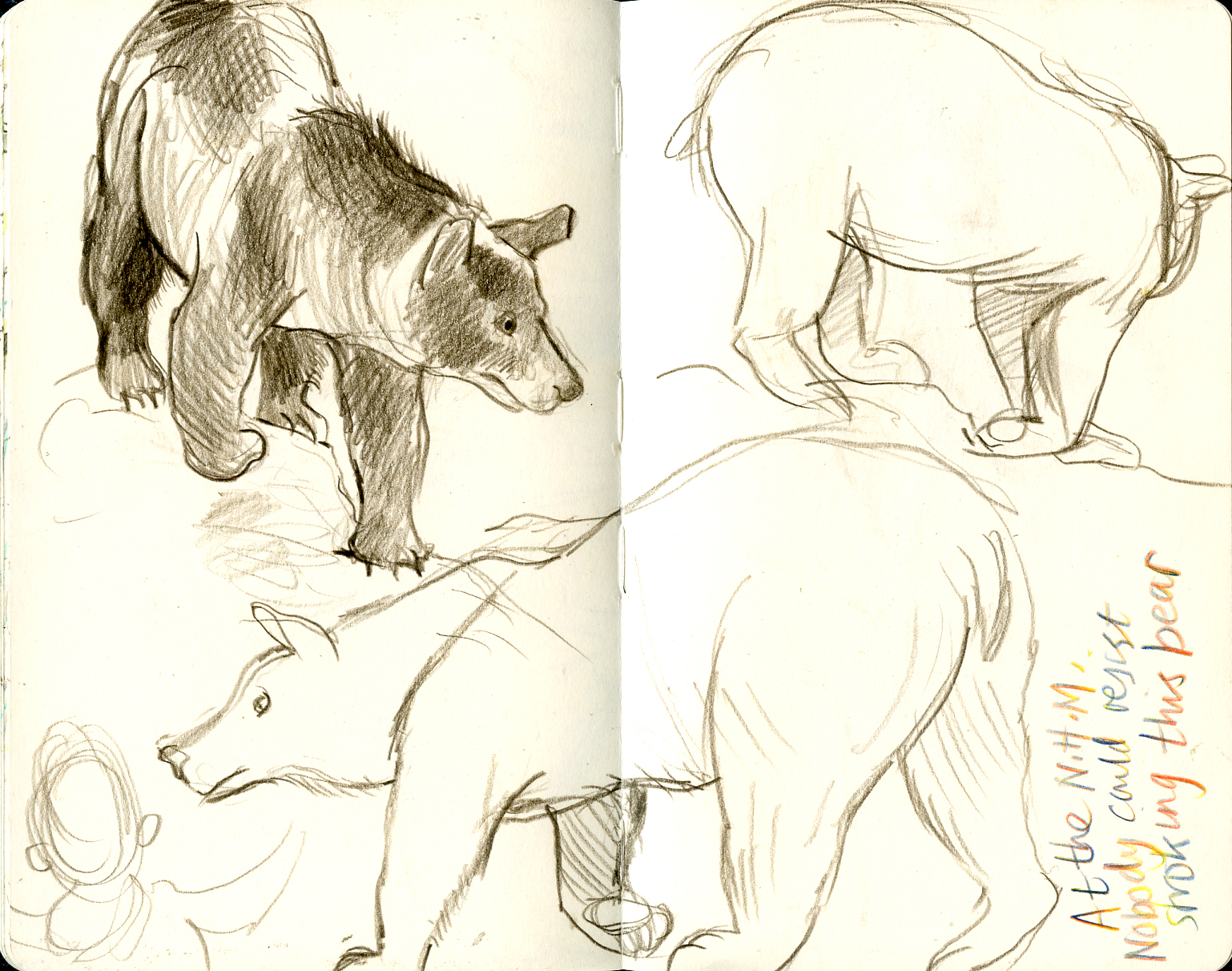 nhm-bear