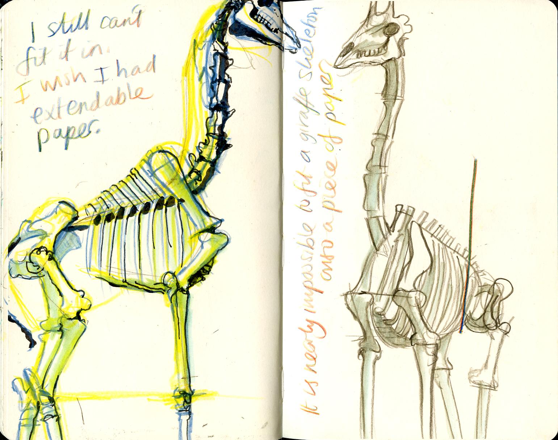 nhm-giraffe-02