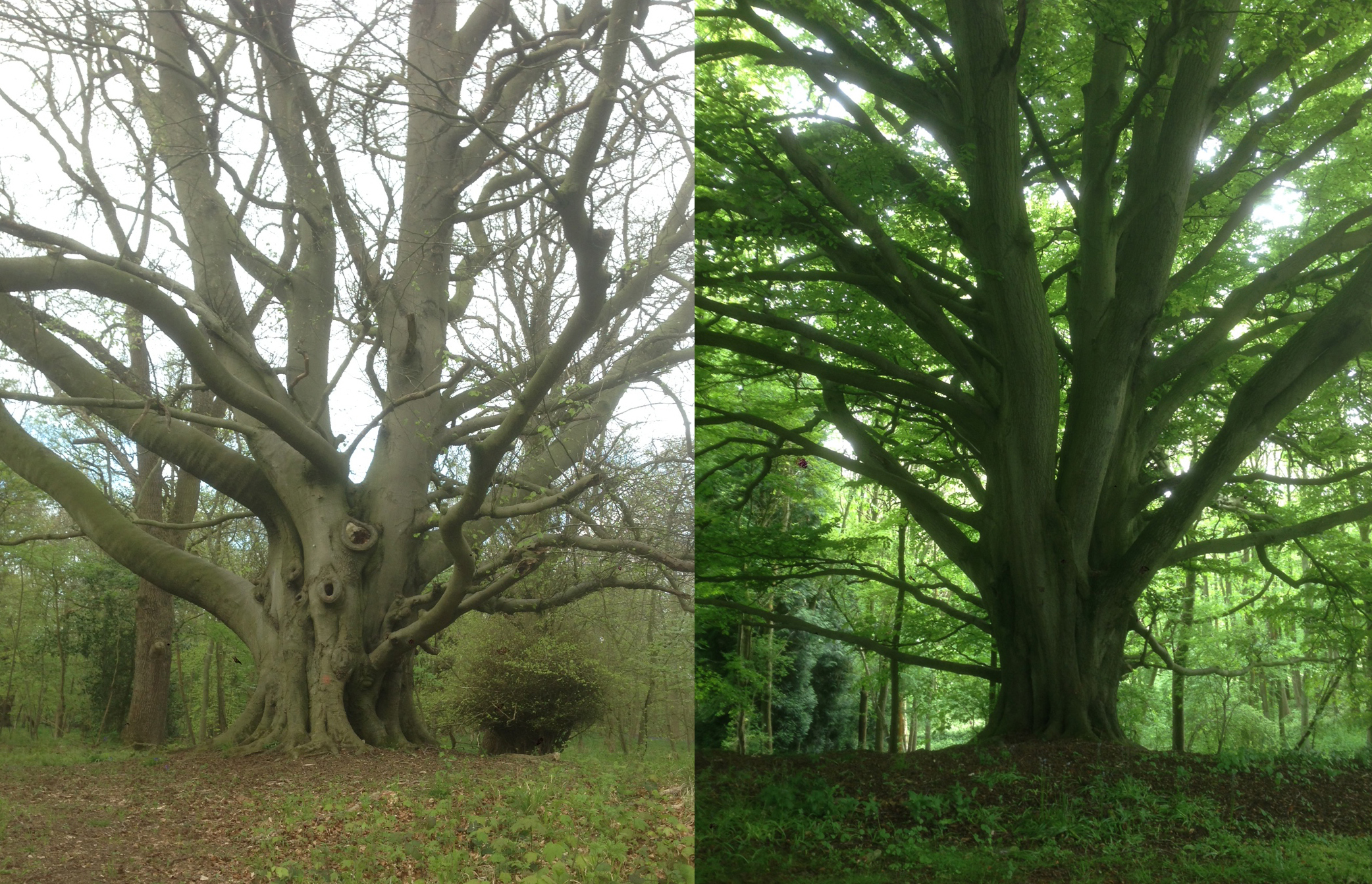 02A Wytham treeS