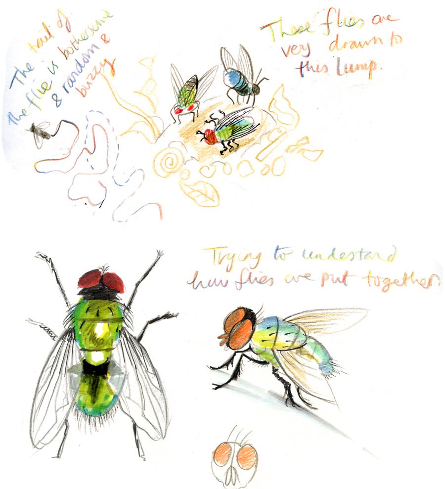 03a flies
