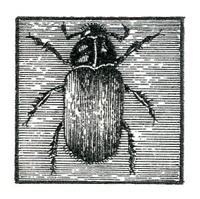 35 JVL Beetle