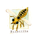 09 Priscilla
