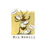 13 Weevil