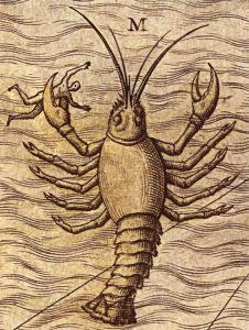 10c sea scorpion