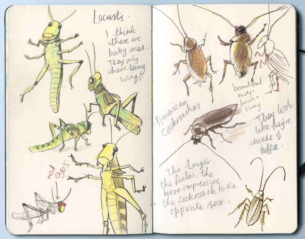 insectsS