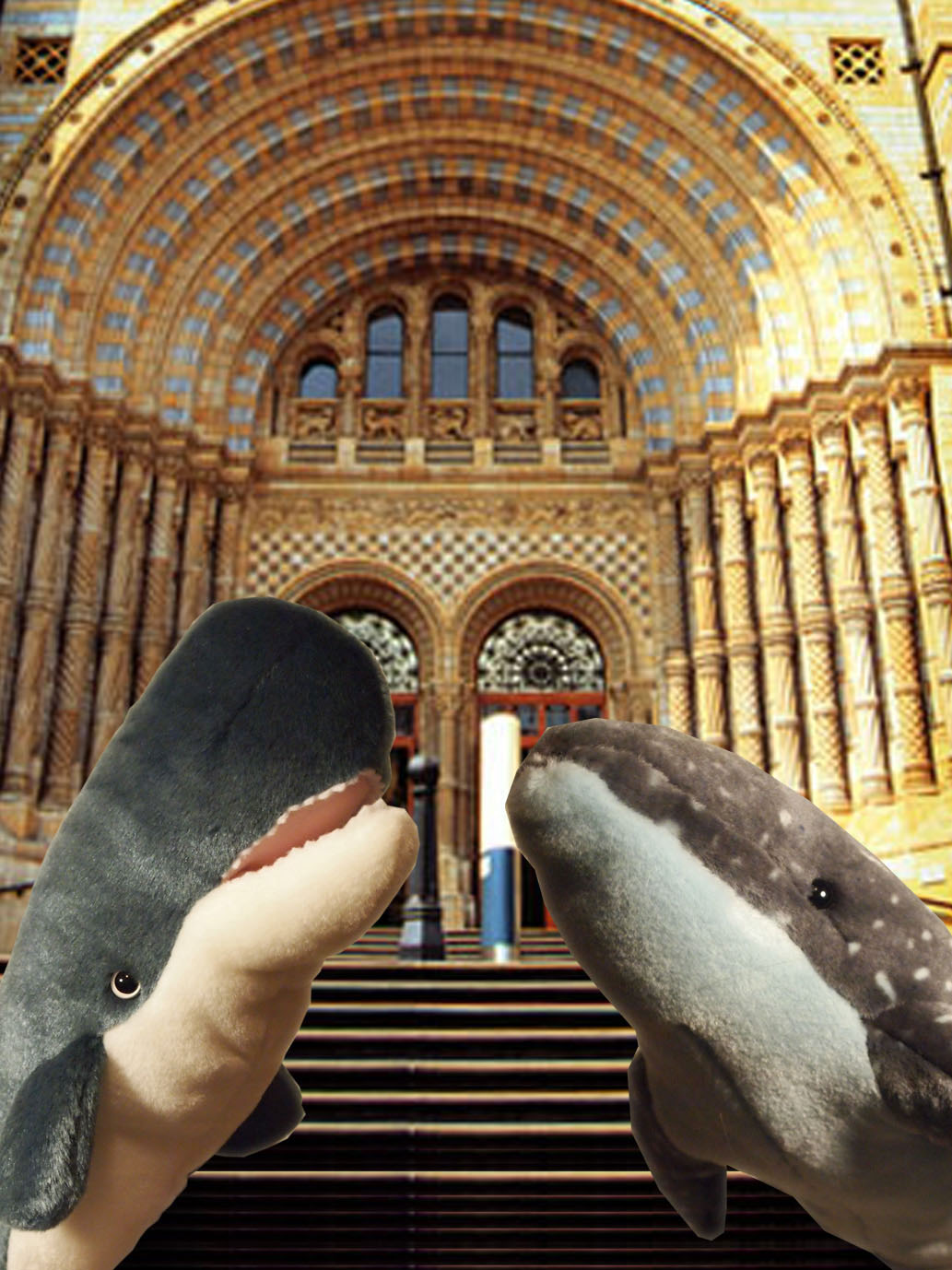 Whales at Museum