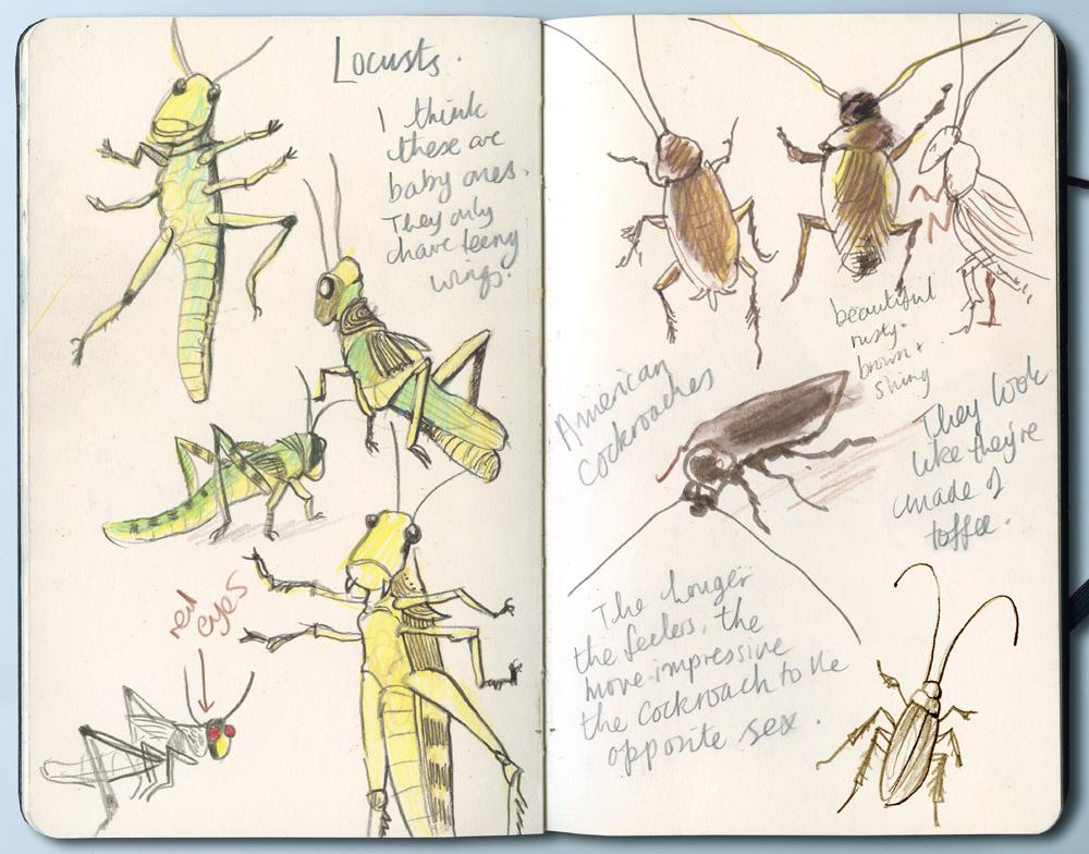 04 locusts