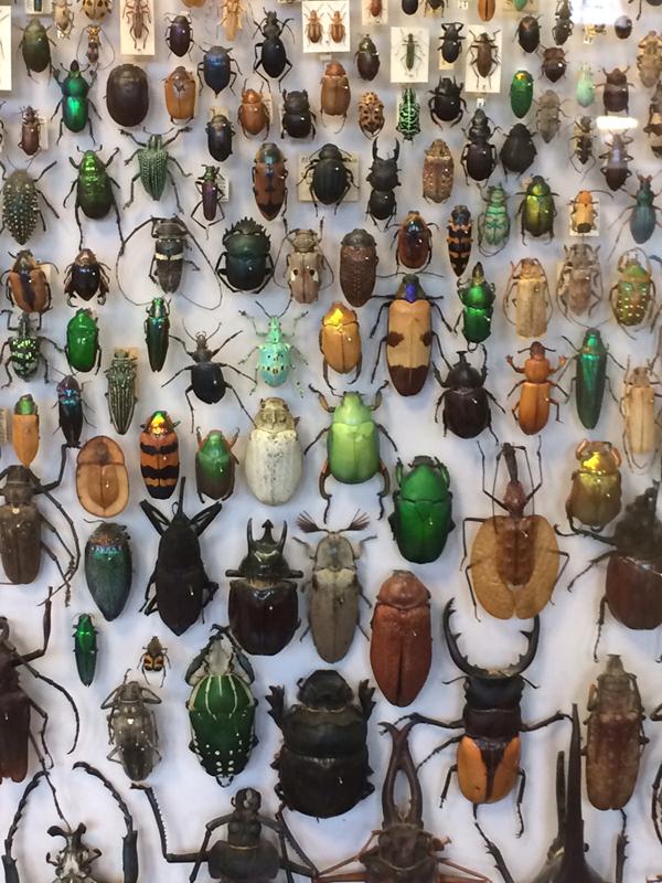 31 insetti